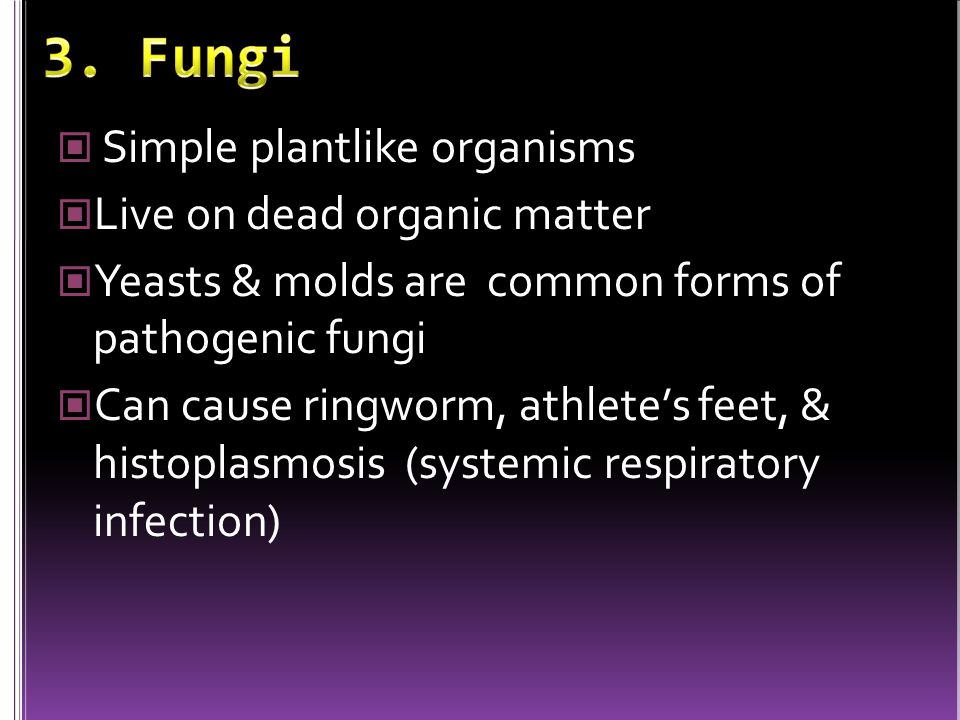 3. Fungi Simple plantlike organisms Live on dead organic matter