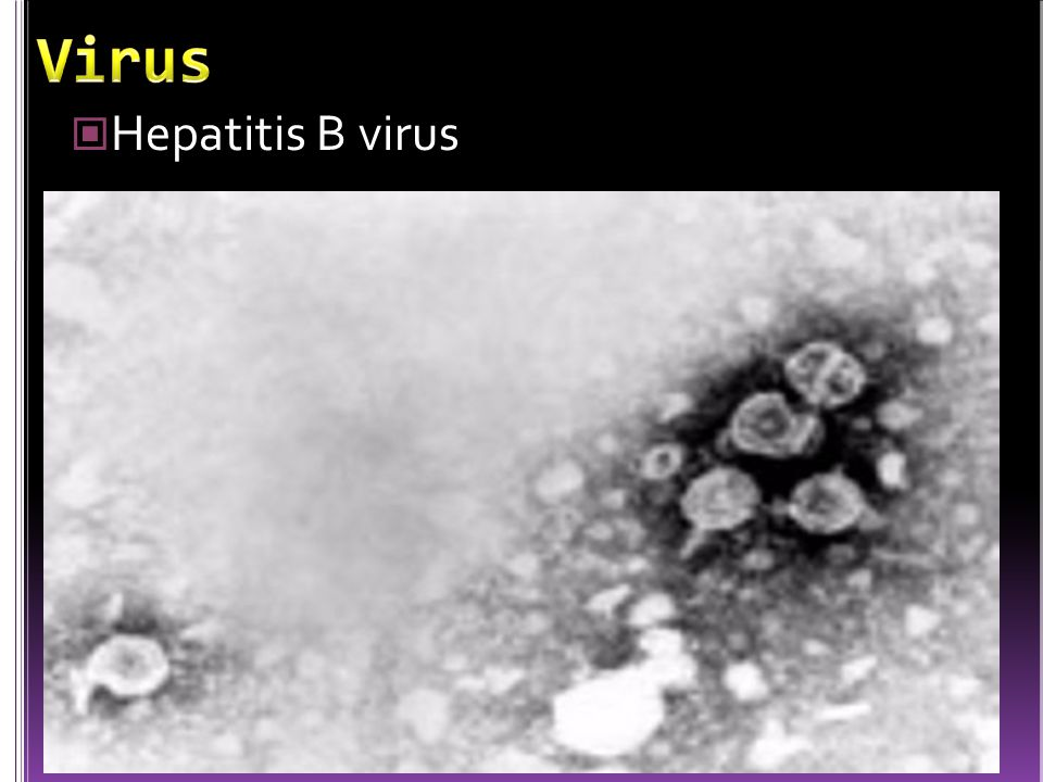 Virus Hepatitis B virus