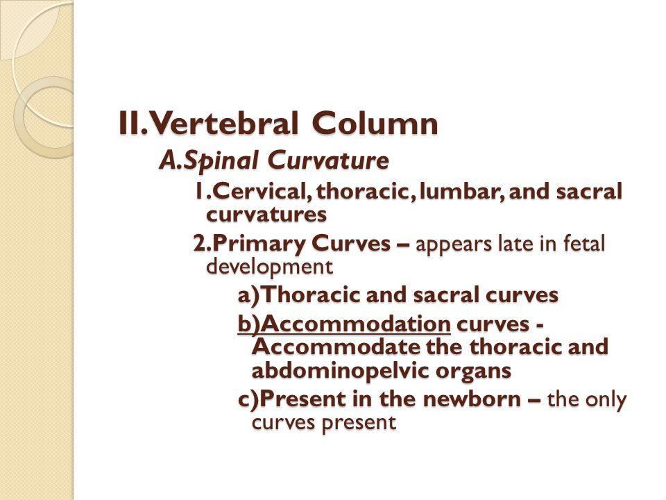 II.Vertebral Column A.Spinal Curvature