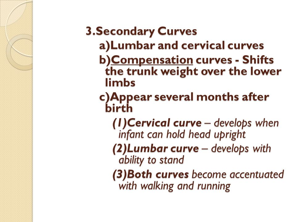 3.Secondary Curves a)Lumbar and cervical curves. b)Compensation curves - Shifts the trunk weight over the lower limbs.
