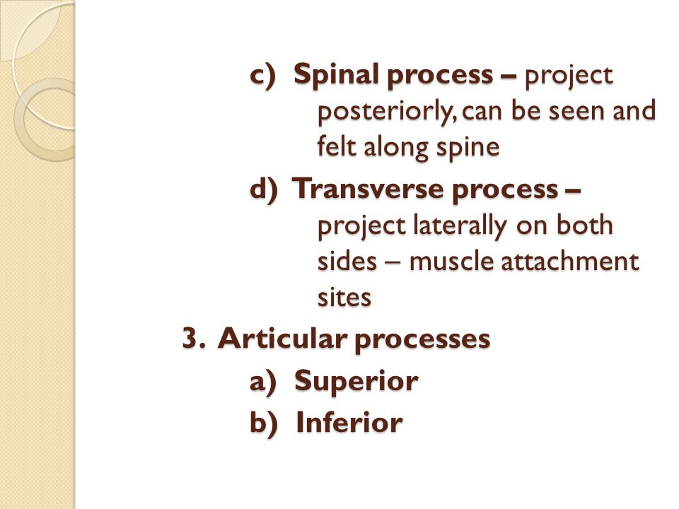 c) Spinal process – project posteriorly, can be seen and felt along spine d) Transverse process – project laterally on both sides – muscle attachment sites 3.