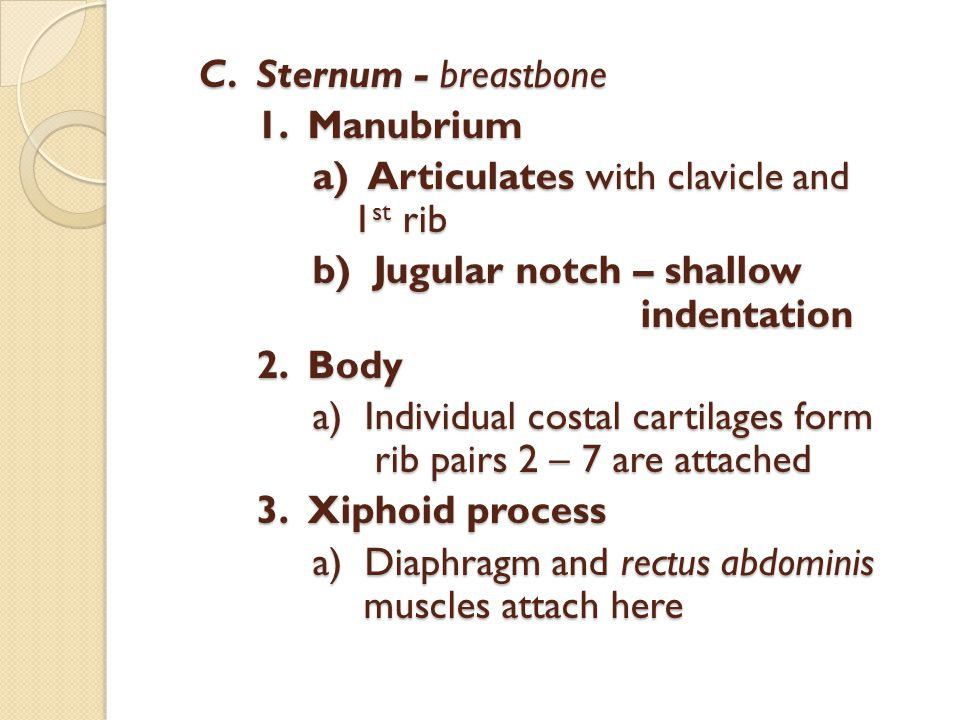 C. Sternum - breastbone 1.