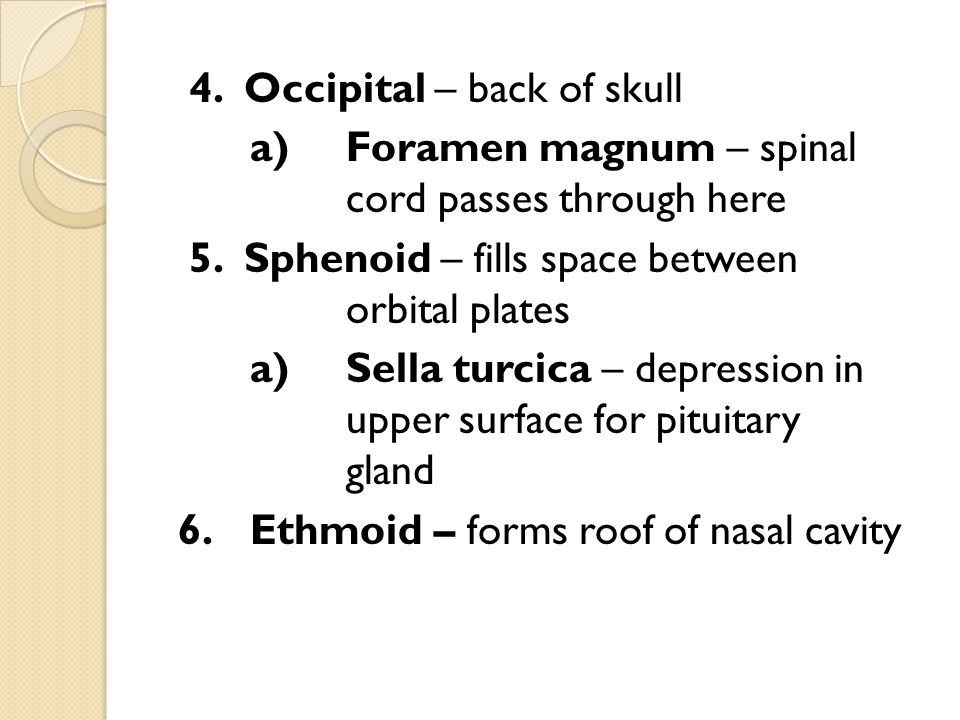 4. Occipital – back of skull a) Foramen magnum – spinal cord passes through here 5.