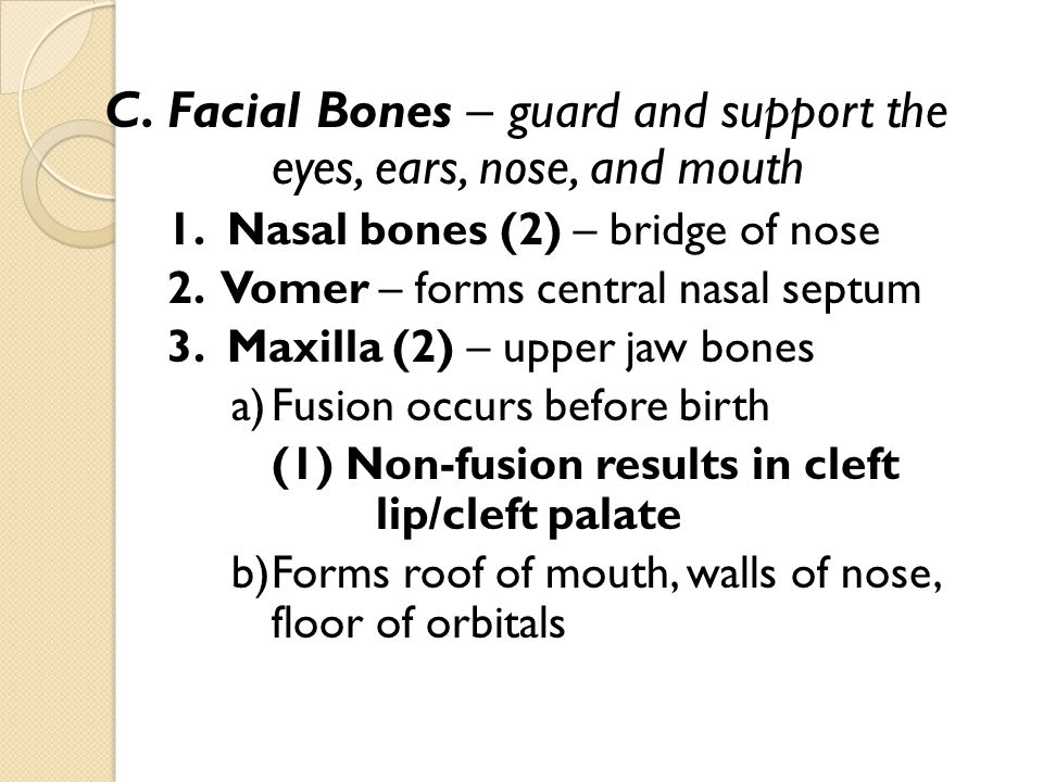C. Facial Bones – guard and support the eyes, ears, nose, and mouth