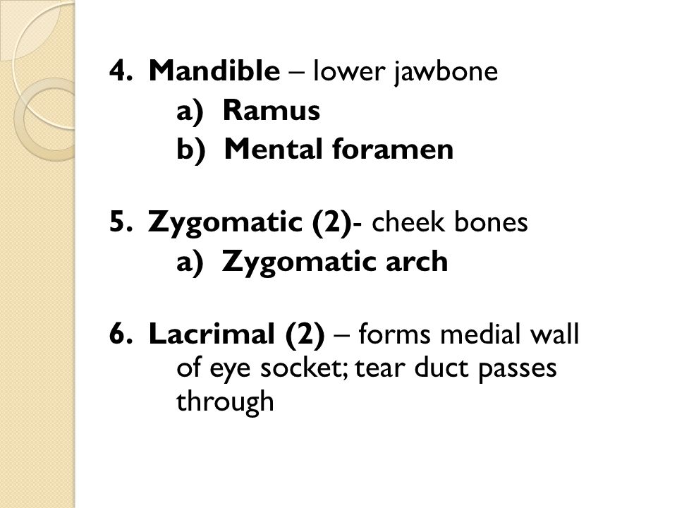 5. Zygomatic (2)- cheek bones a) Zygomatic arch