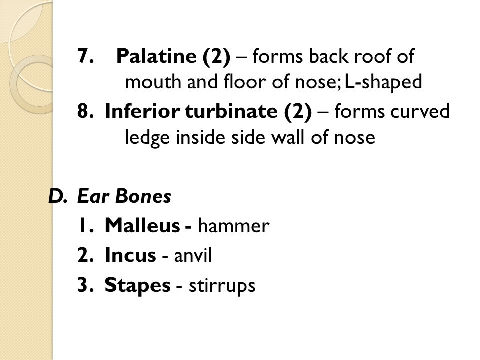 7. Palatine (2) – forms back roof of mouth and floor of nose; L-shaped 8.