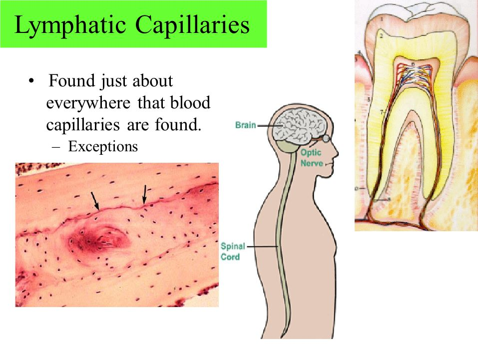 Lymphatic Capillaries