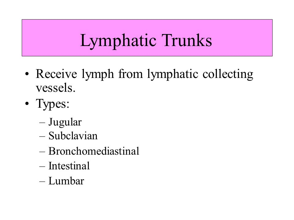• Receive lymph from lymphatic collecting • Types: