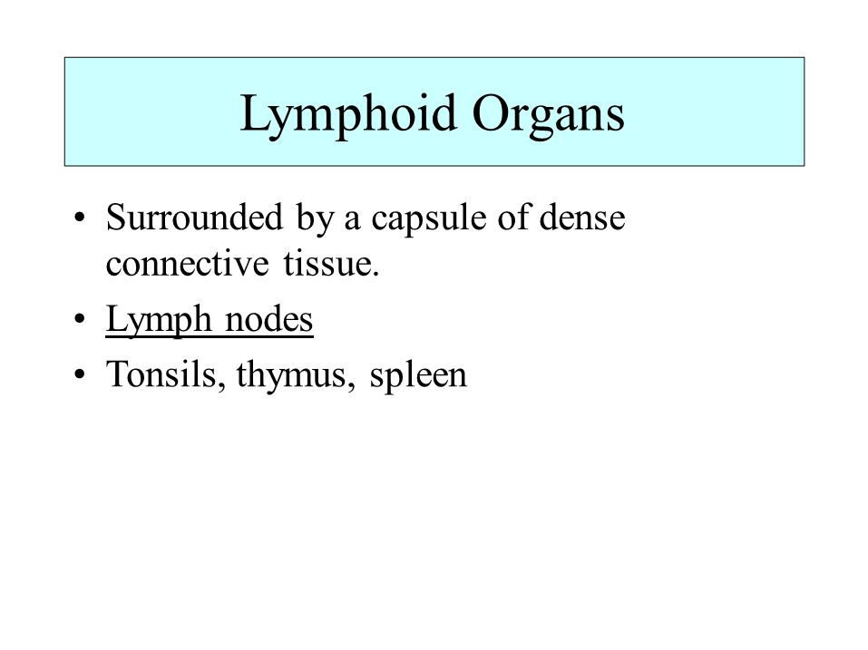Lymphoid Organs • Surrounded by a capsule of dense connective tissue.