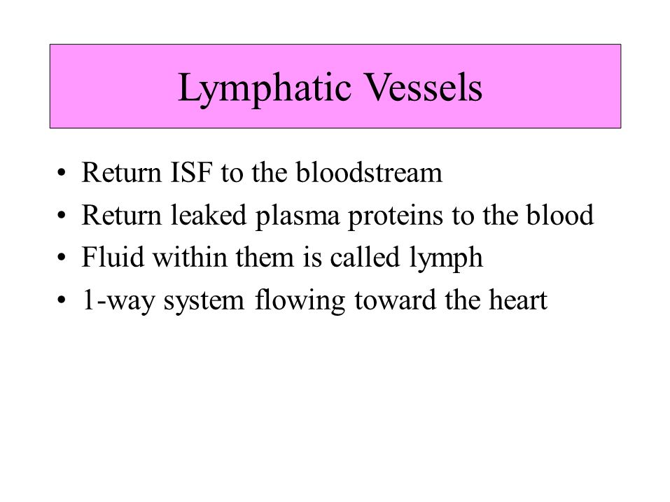 Lymphatic Vessels • Return ISF to the bloodstream