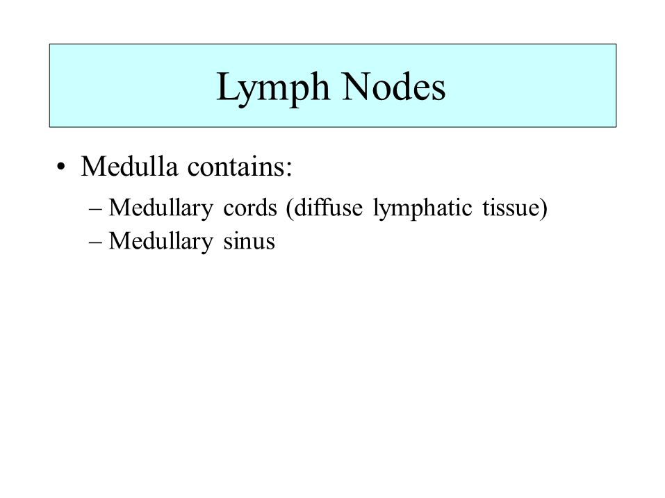 Lymph Nodes • Medulla contains: