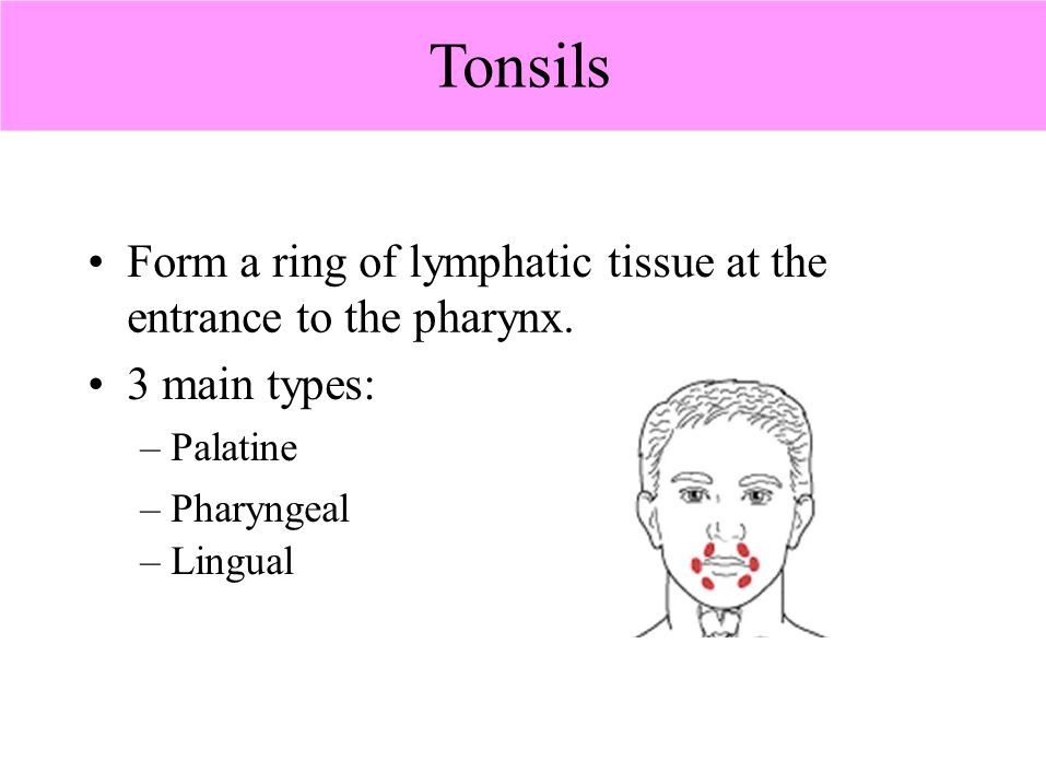 Tonsils • Form a ring of lymphatic tissue at the