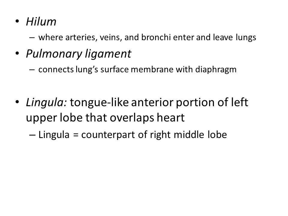 Hilum Pulmonary ligament
