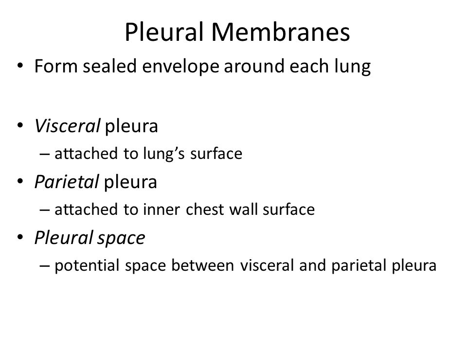 Pleural Membranes Form sealed envelope around each lung
