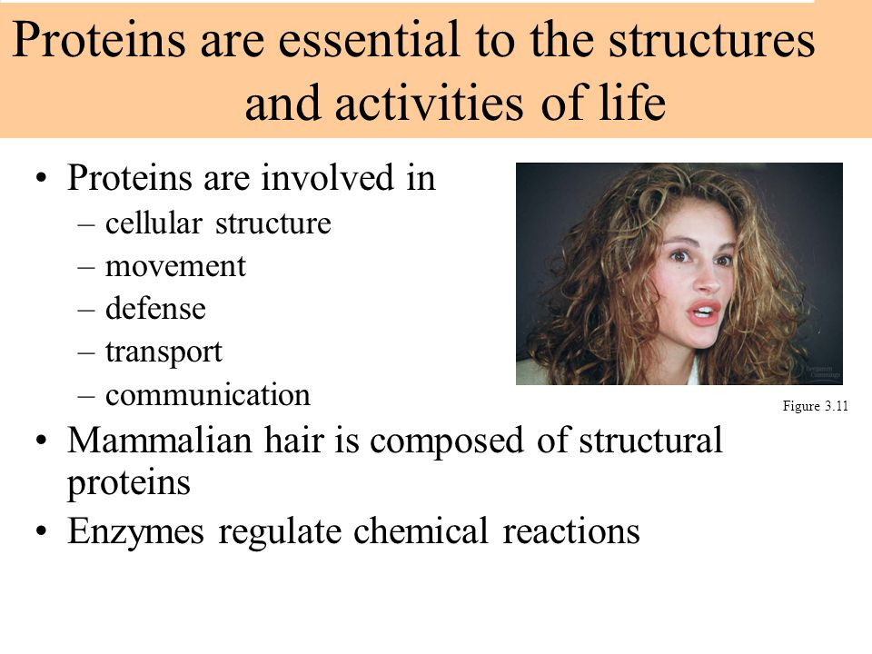 Proteins are essential to the structures and activities of life