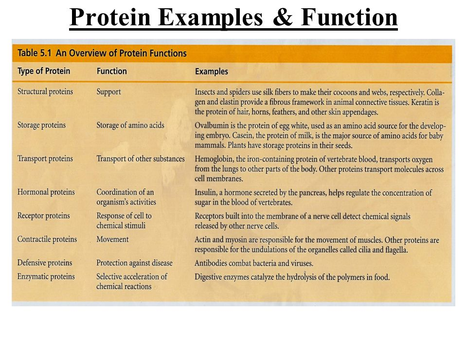 Protein Examples & Function
