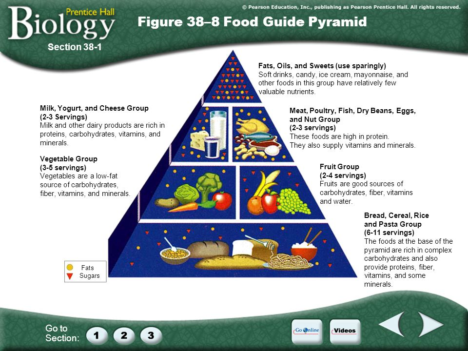 Figure 38–8 Food Guide Pyramid