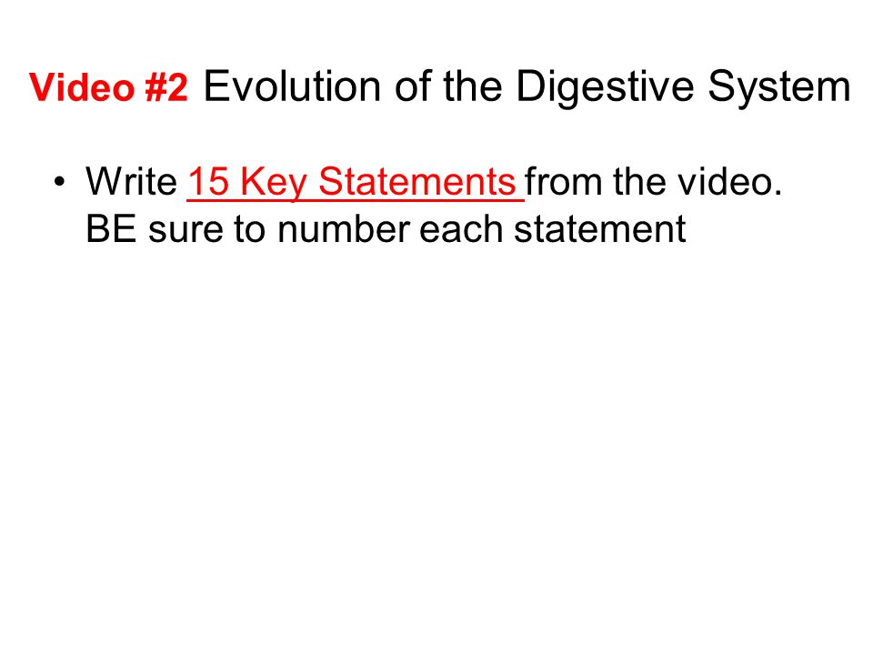 Video #2 Evolution of the Digestive System