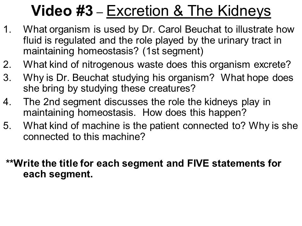 Video #3 – Excretion & The Kidneys