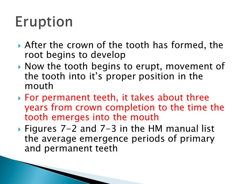 Eruption After the crown of the tooth has formed, the root begins to develop.