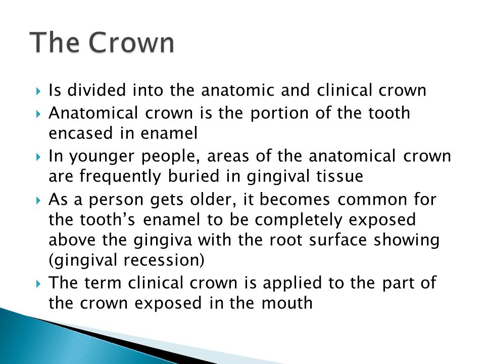 The Crown Is divided into the anatomic and clinical crown