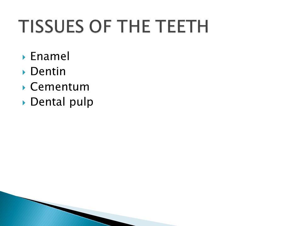 TISSUES OF THE TEETH Enamel Dentin Cementum Dental pulp
