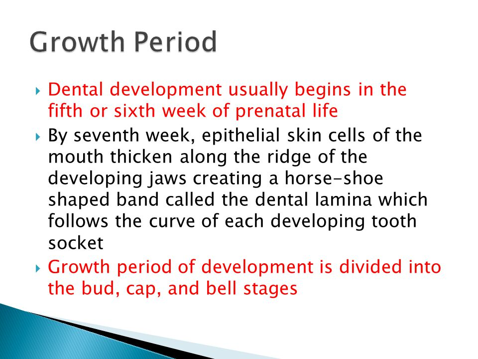 Growth Period Dental development usually begins in the fifth or sixth week of prenatal life.