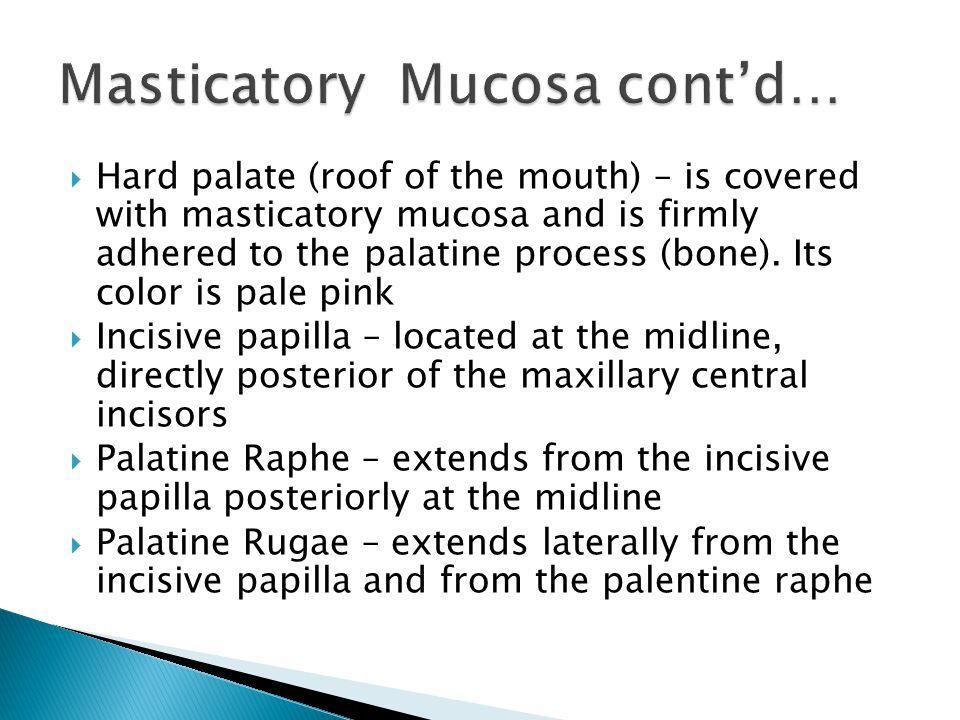Masticatory Mucosa cont'd…