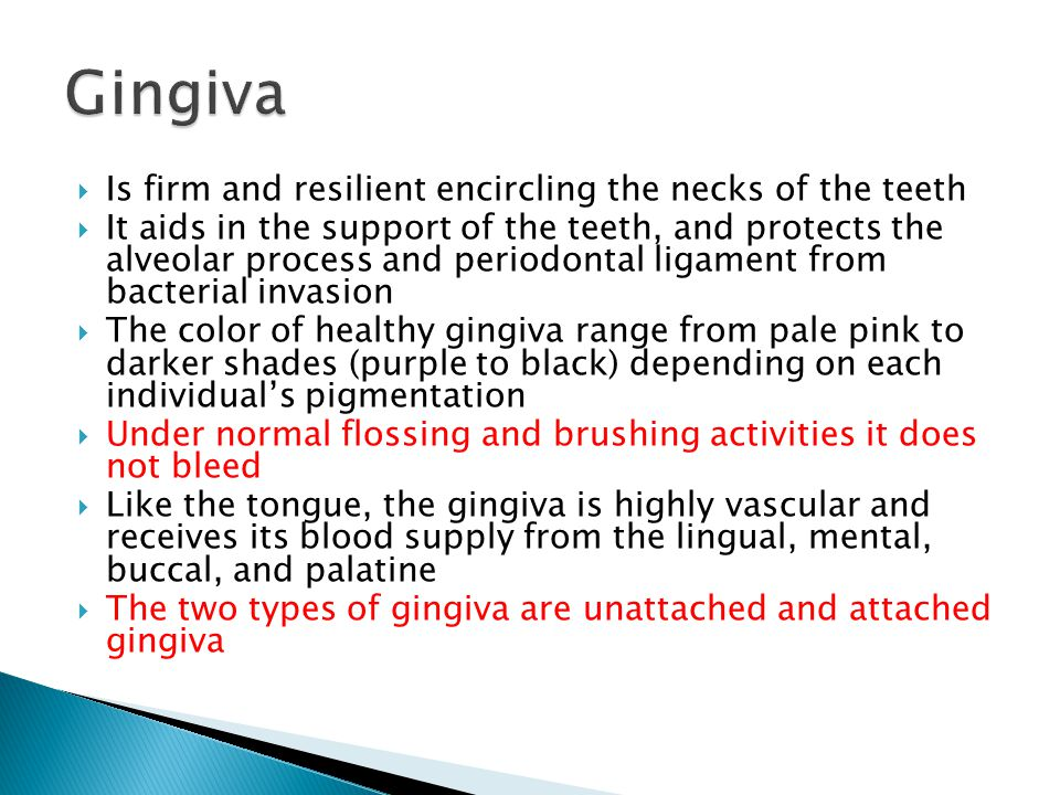 Gingiva Is firm and resilient encircling the necks of the teeth