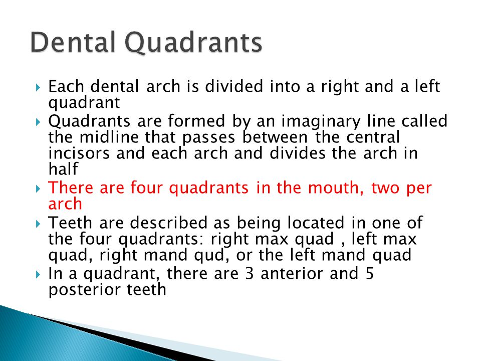 Dental Quadrants Each dental arch is divided into a right and a left quadrant.