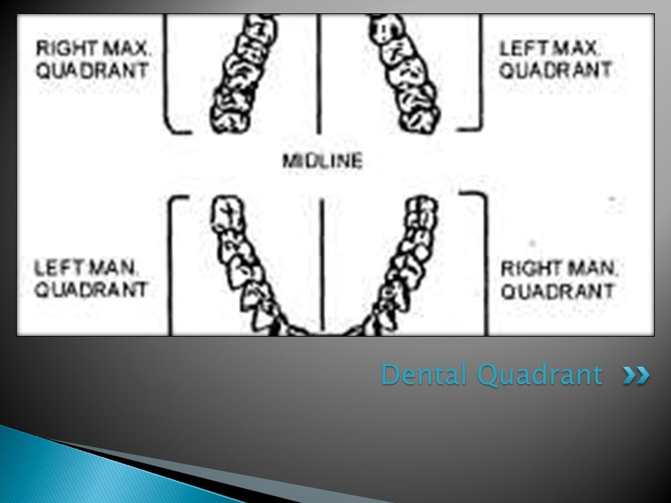 Dental Quadrant