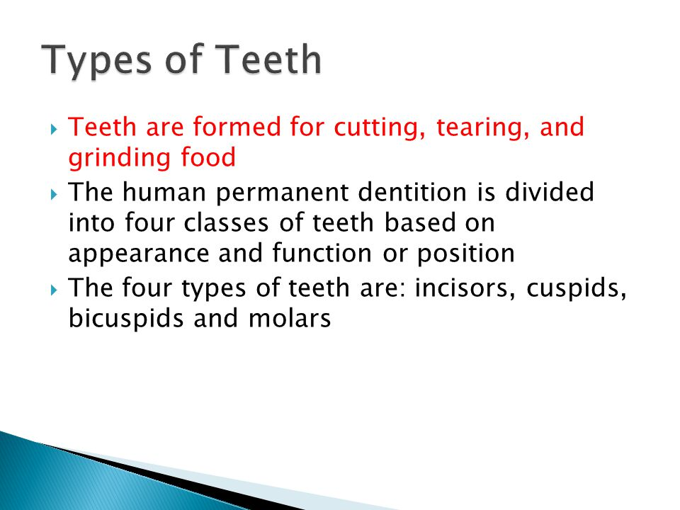 Types of Teeth Teeth are formed for cutting, tearing, and grinding food.