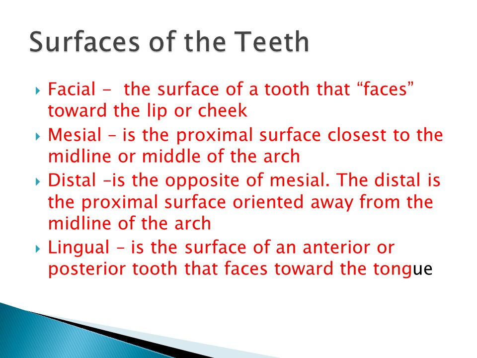 Surfaces of the Teeth Facial - the surface of a tooth that faces toward the lip or cheek.