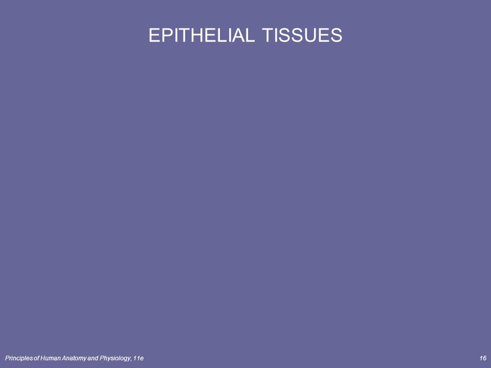 EPITHELIAL TISSUES Principles of Human Anatomy and Physiology, 11e