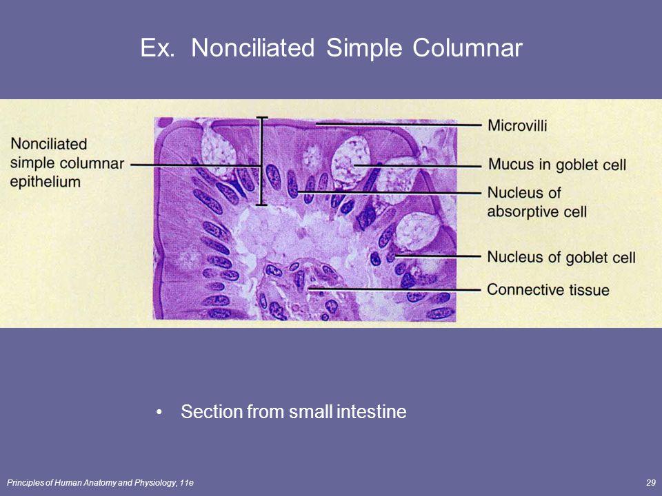 Ex. Nonciliated Simple Columnar