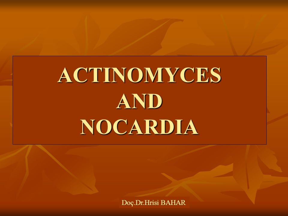 ACTINOMYCES AND NOCARDIA