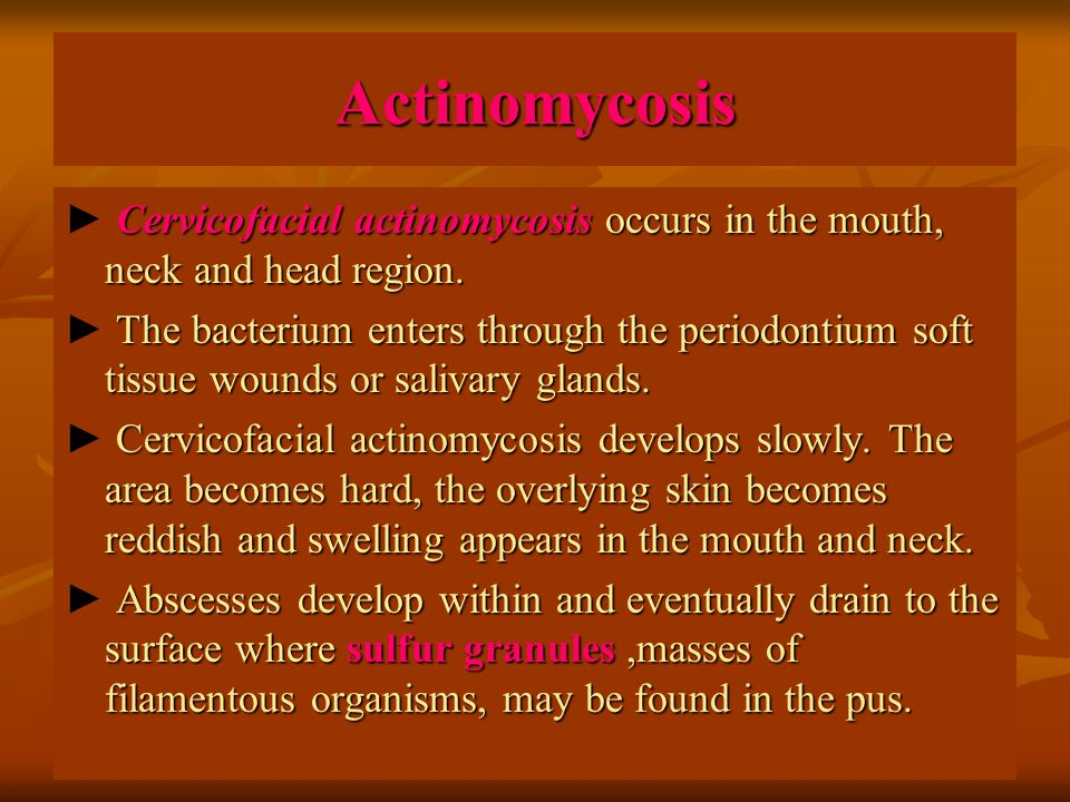 Actinomycosis ► Cervicofacial actinomycosis occurs in the mouth, neck and head region.