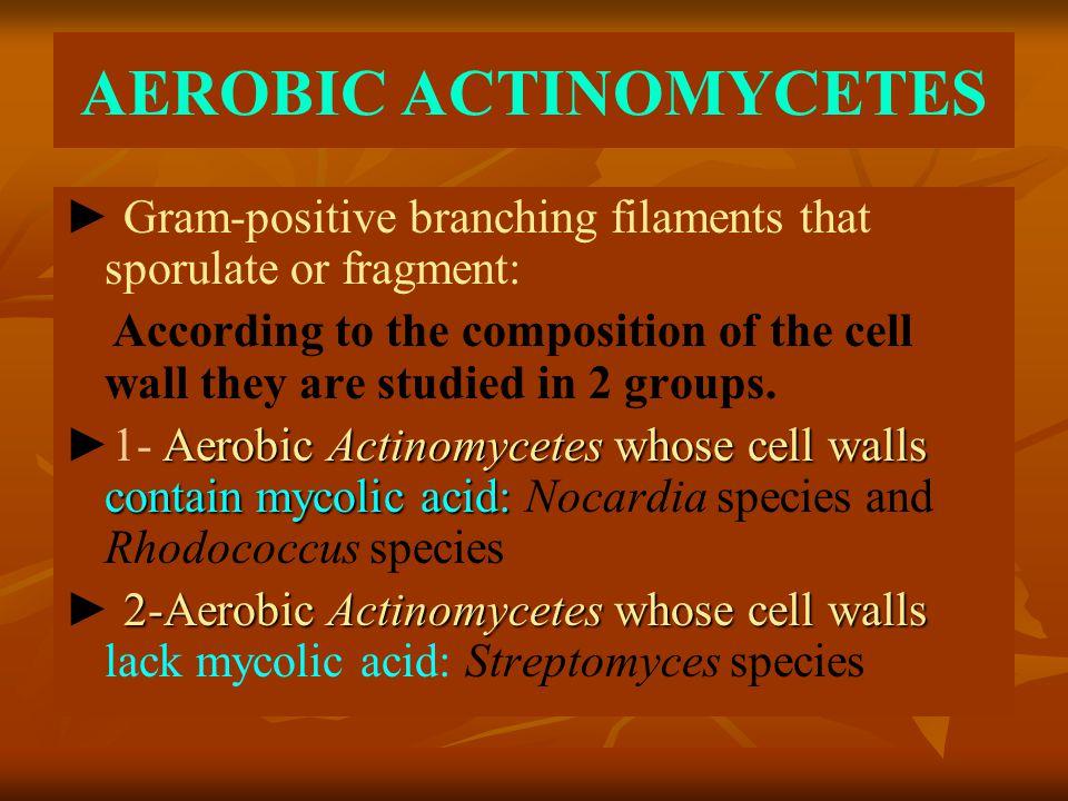 AEROBIC ACTINOMYCETES