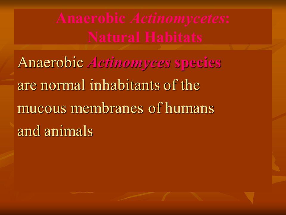 Anaerobic Actinomycetes: Natural Habitats
