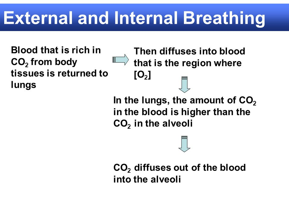 External and Internal Breathing