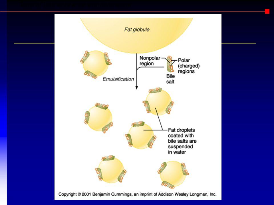 Role of bile salts & fat emulsification