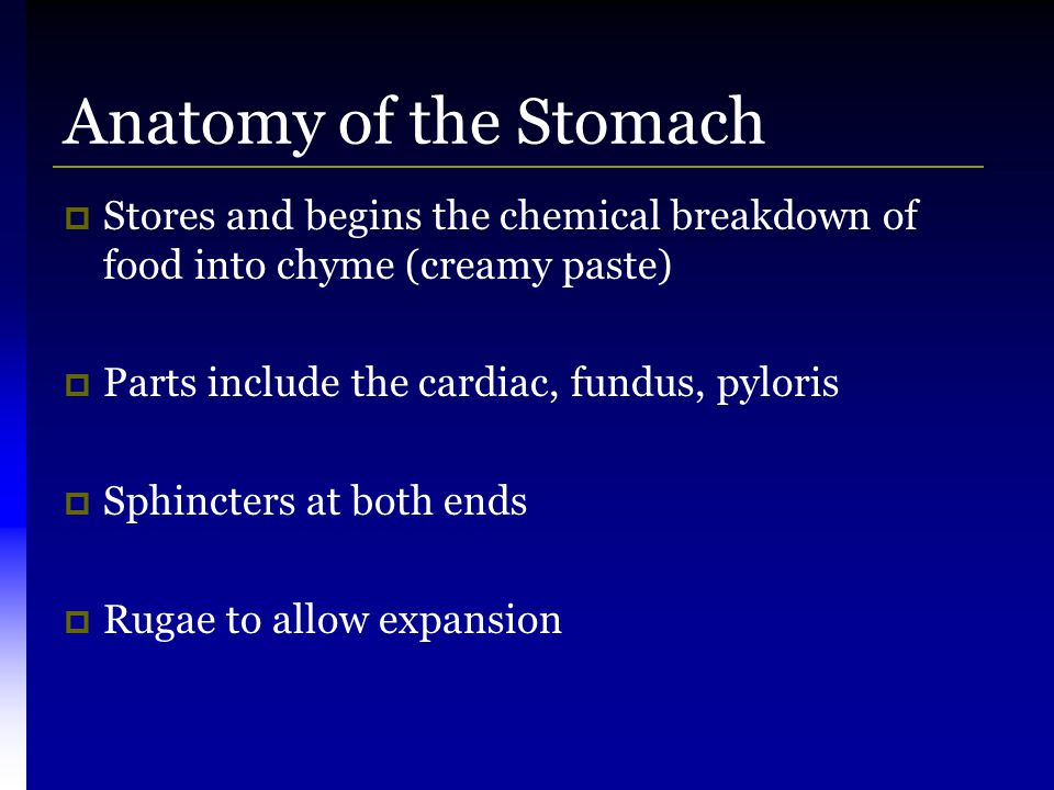 Anatomy of the Stomach Stores and begins the chemical breakdown of food into chyme (creamy paste) Parts include the cardiac, fundus, pyloris.