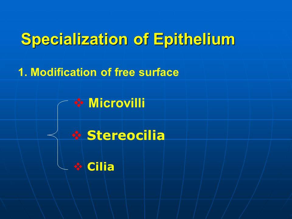 Specialization of Epithelium