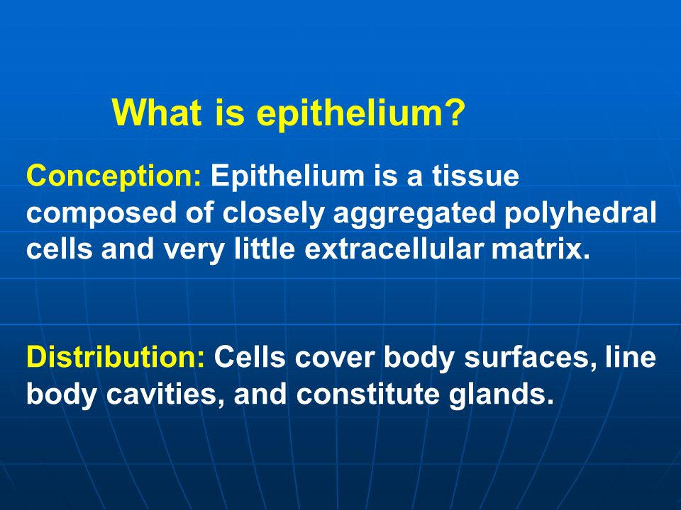 What is epithelium Conception: Epithelium is a tissue composed of closely aggregated polyhedral cells and very little extracellular matrix.