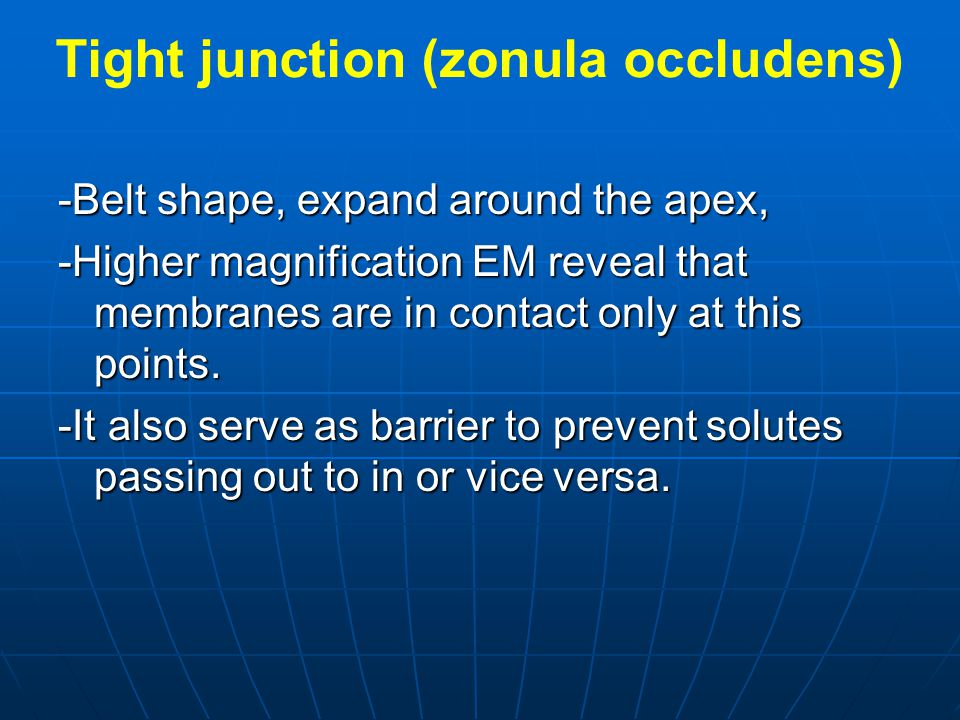 Tight junction (zonula occludens)