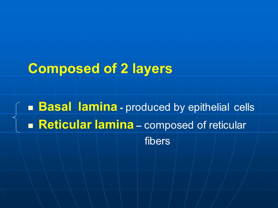 Composed of 2 layers Basal lamina - produced by epithelial cells