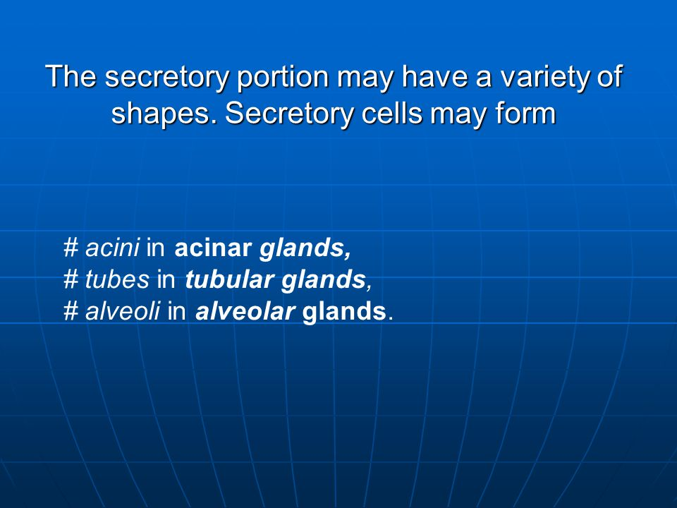 The secretory portion may have a variety of shapes
