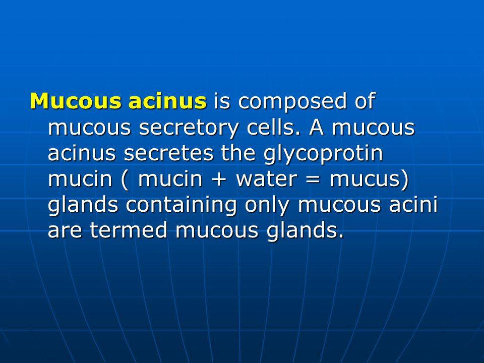 Mucous acinus is composed of mucous secretory cells