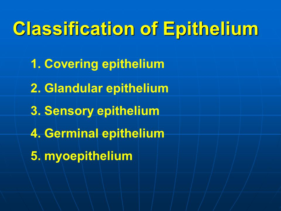 Classification of Epithelium
