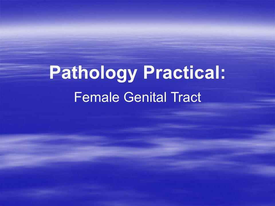 Pathology Practical: Female Genital Tract